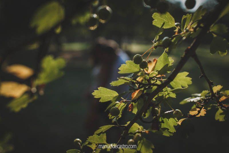 preboda-parque-alamillo-sevilla-0019